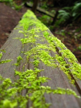log with green moss