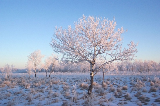 lone tree light frost