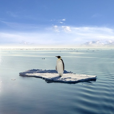 lonely penguin picture