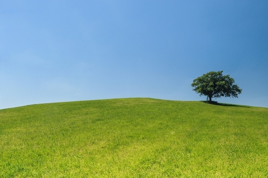 lonely tree on a green hill