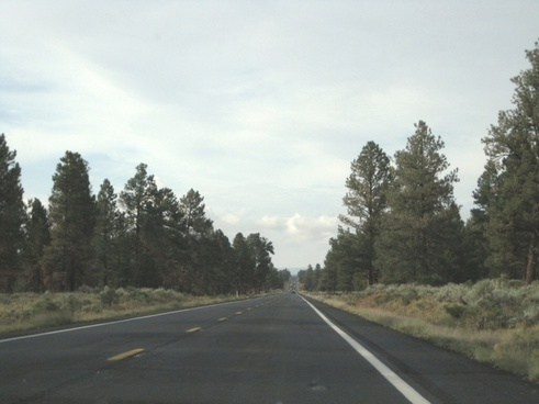 long straight highway through trees