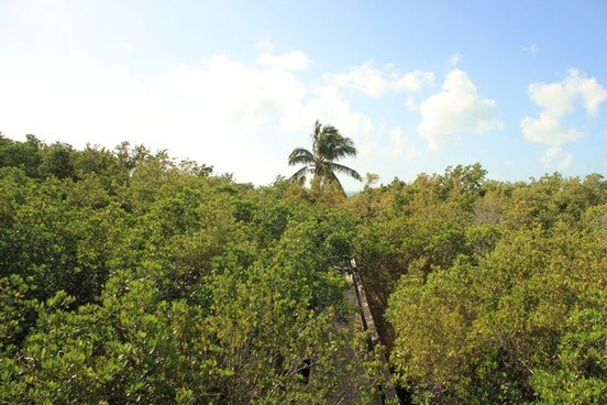 looking at the forest canopy at long key state park florida