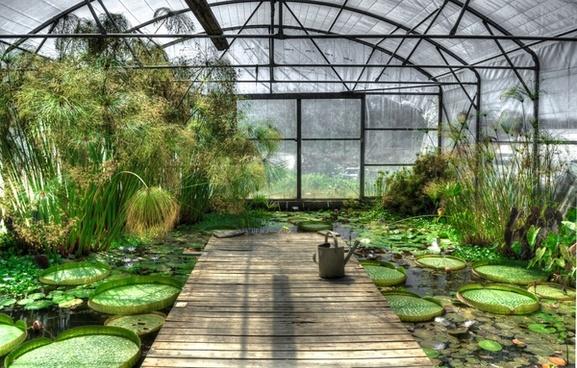 lotus greenhouse
