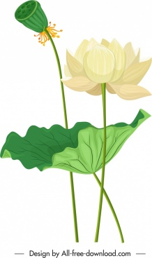 lotus painting blooming flower sketch colored classical design