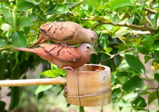 love dove doves bird