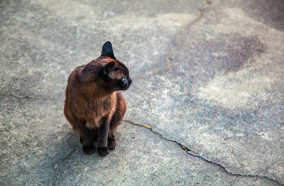 loved shelter cat