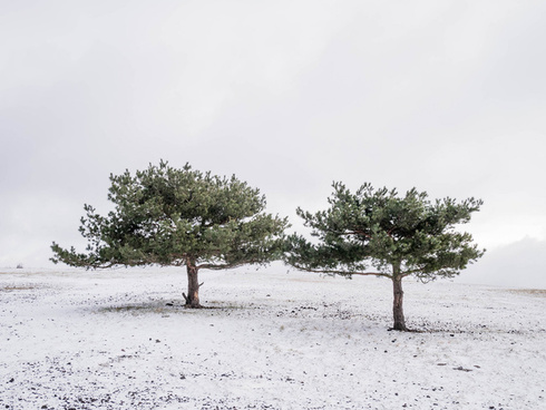 lovely lonely trees