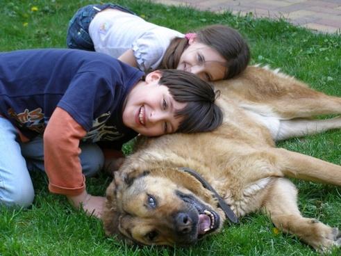 loyalty friendship dog