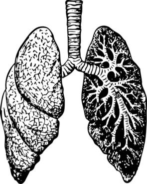 Lungs clip art
