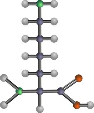Lysine (amino acid)