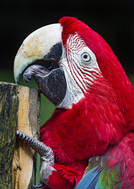 macaw and wood