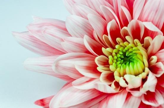 macro flower nature