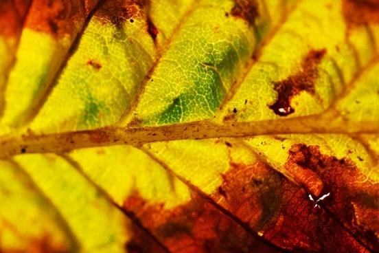 macro of an autumn leaf