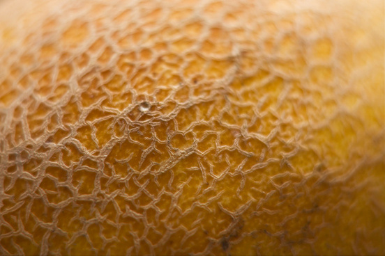 macro shot of cantaloupe reticulated skin texture