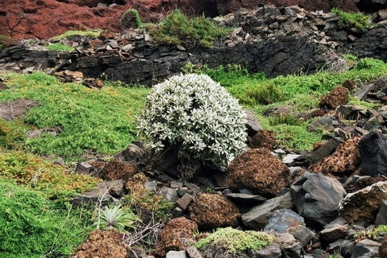 madeira east coast vegetation