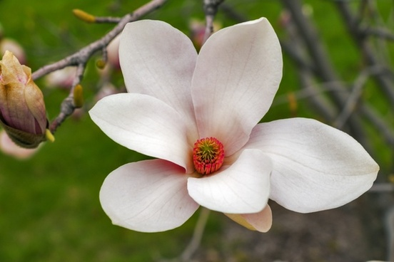 magnolia wood floral