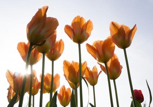 mainau orange flowers