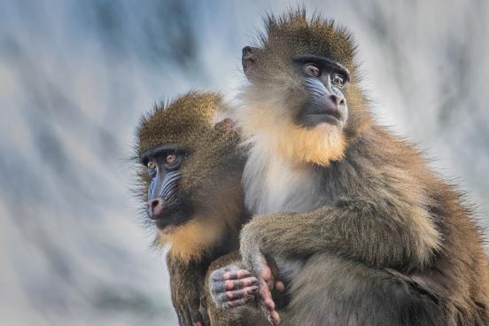 closeup of cute primate family