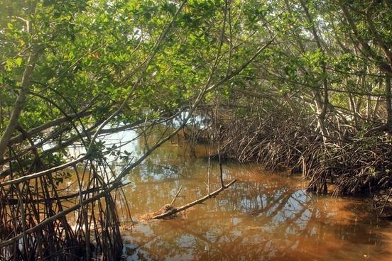Mangrove free stock photos download (18 Free stock photos ...