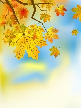 maple leaves tree background bright colored blurred decor