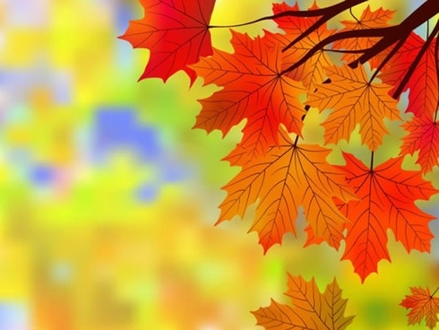 autumn background maple leaves decor bright blurred design