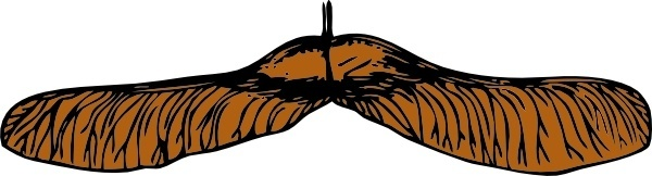 Maple Seed clip art