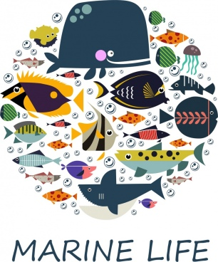 marine backdrop multicolored fishes icons circle layout