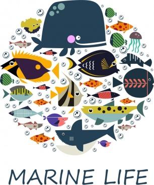 marine backdrop multicolored fishes icons circle layout
