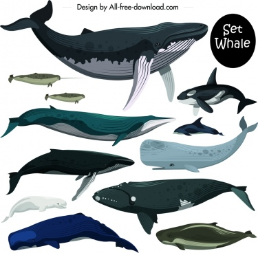 marine creature icons set colored whale dolphin decor
