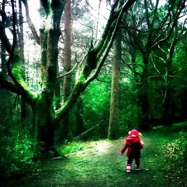 mark irvineartistwebsitescom walk in the woods