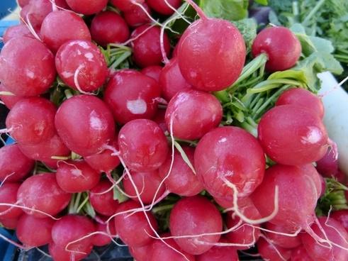 market radishes garden