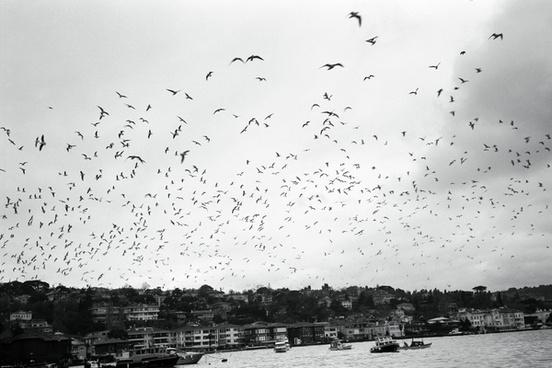 martilar seagulls