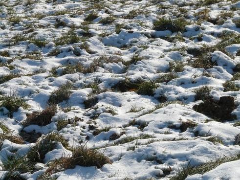 meadow field snowy