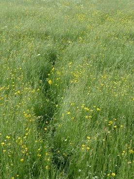 meadow flower meadow spring