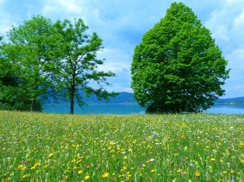 meadow flowers bloom