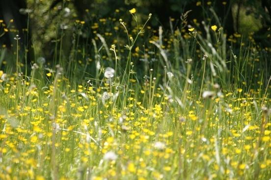 meadow flowers spring