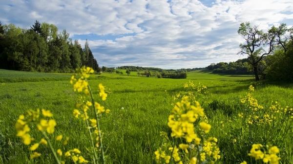 meadow flowers spring meadow