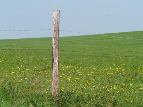 meadow nature landscape