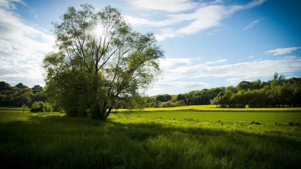 meadow spring meadow tree