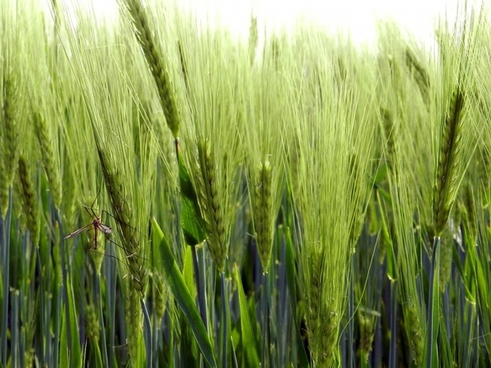 melga green nature