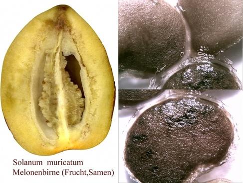 melon pear pepino