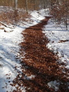 migratory path trail winter