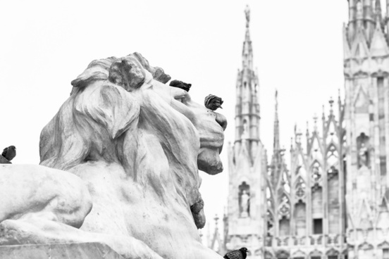 milano white lion