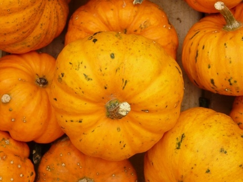 mini pumpkins pumpkin mandarin