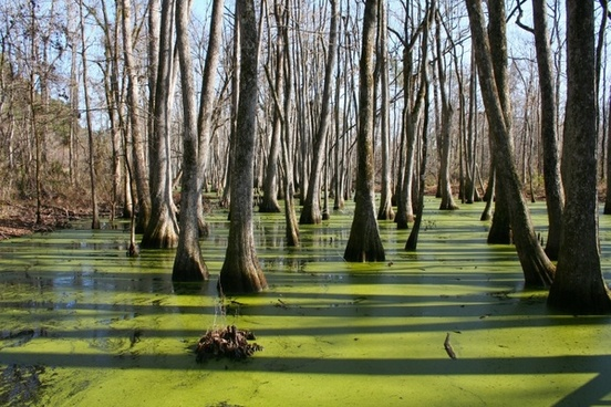 mississippi cypress swamp water