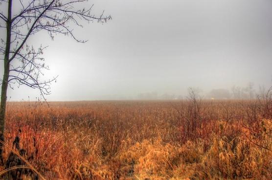 misty marsh in madison wisconsin