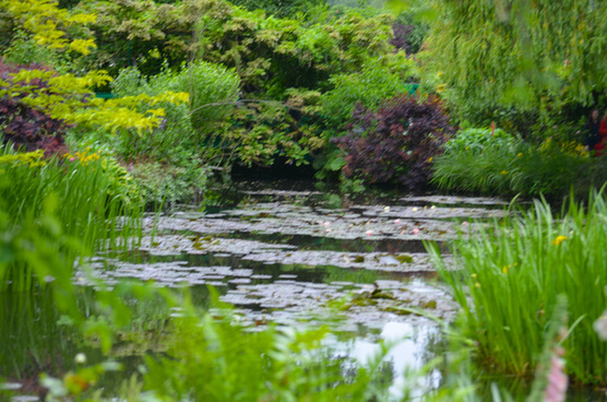 monets water lily pond