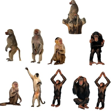 monkeys highdefinition picture