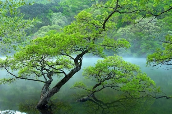 mood tree hd picture