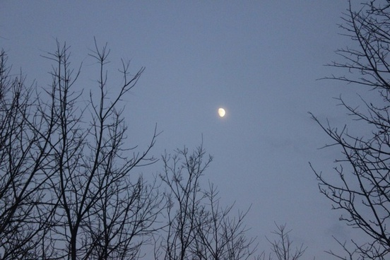moon between trees in blue mound state park wisconsin